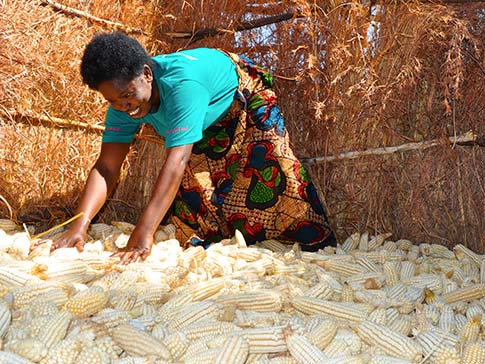 Climate-smart agriculture expert Annie with her maize harvest.