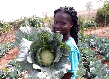 Secondary_image_-_Olivia_cabbage_harvest