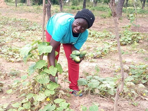 Secondary_image_-_Olivia_cucumber_harvest
