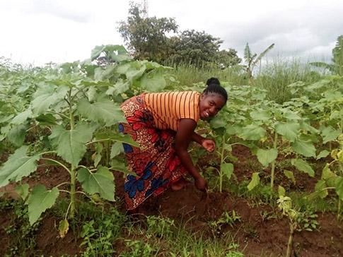 Chise tending crops